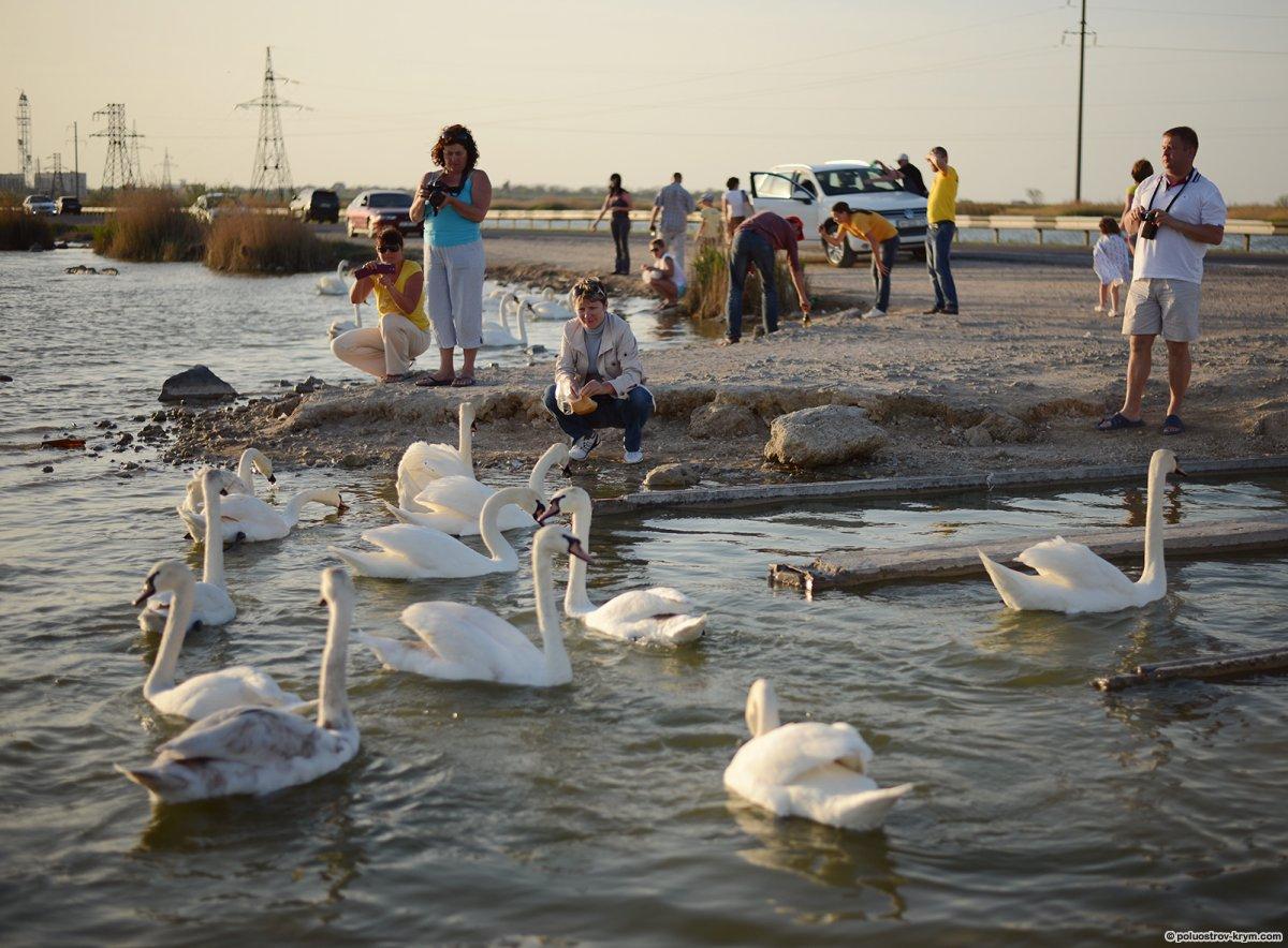 евпатория озеро сасык платная рыбалка
